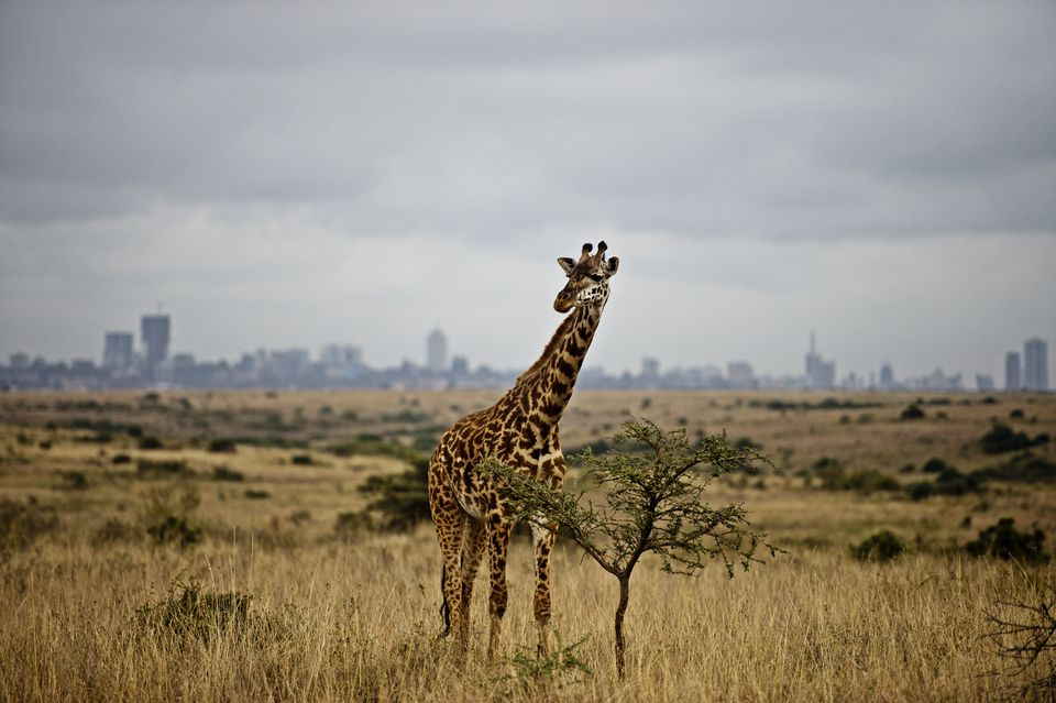 How to Spend a Great Day in Nairobi, Kenya