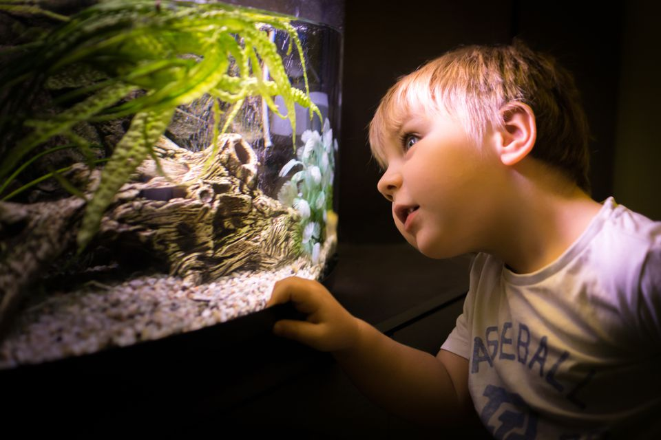 Portrait of boy looking through aquarium glass