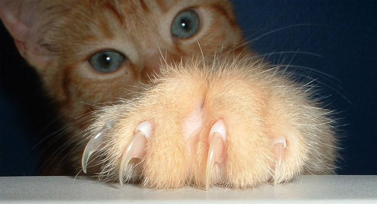 close up of cat's claw