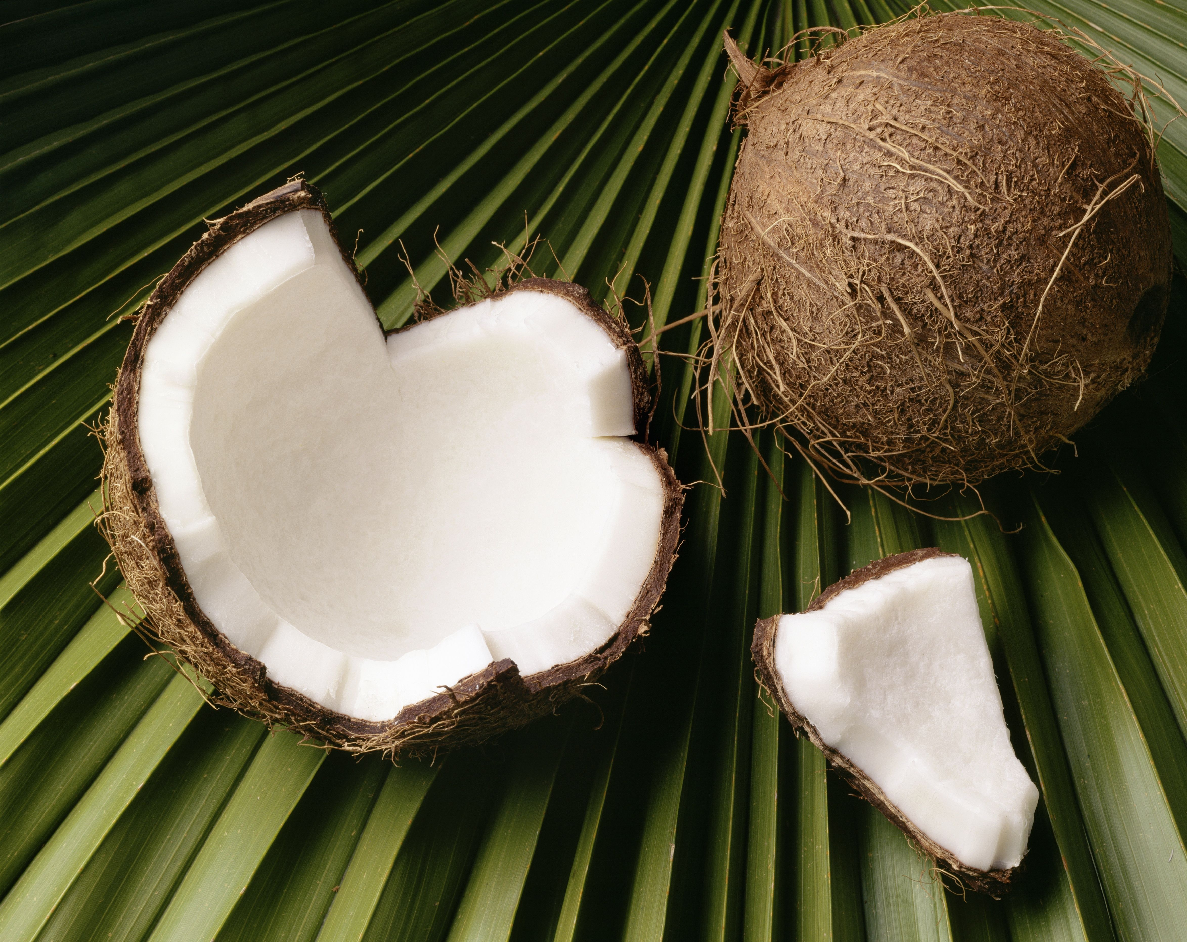 why coconut oil may be beneficial to your bird. Black Bedroom Furniture Sets. Home Design Ideas