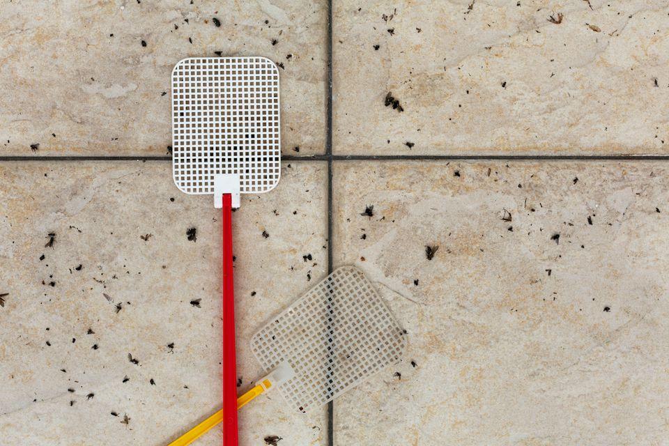 Flyswatter (fly-flap), dead flies