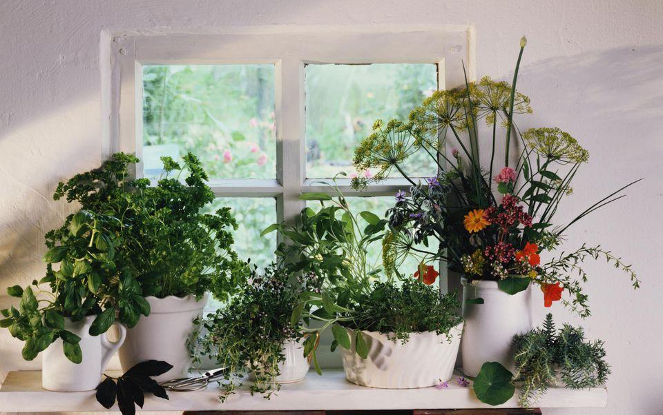 Assorted herbs on windowsill