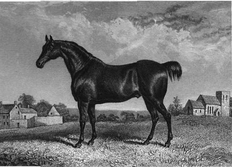 Confidence, a Norfolk Cob, engraved by J. H. Engleheart.