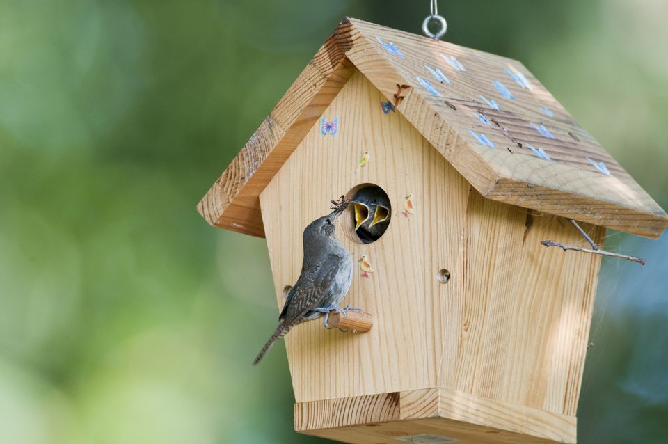 Attract birds with shelter right in your backyard for Building a duck house shelter