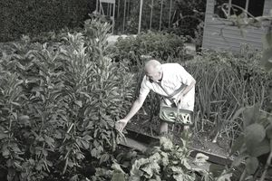 How to grow a victory garden for What was the goal of victory gardens