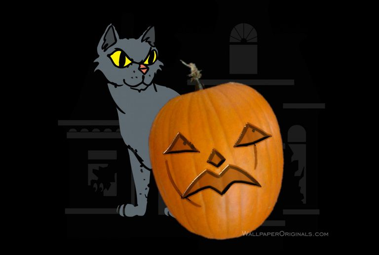 cat with pumpkin desktop wallpaper - Desktop Wallpaper Halloween