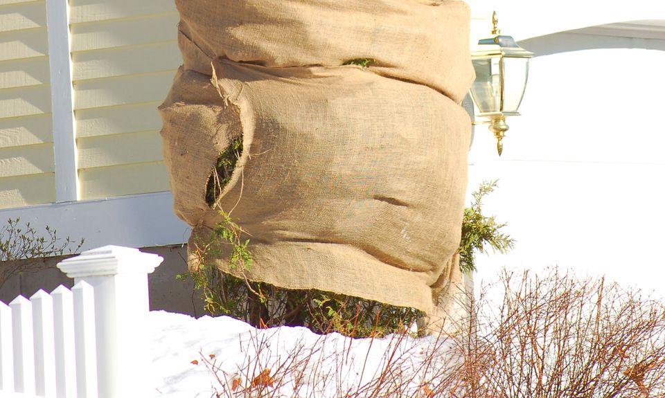 Burlap tree wrap on a shrub.