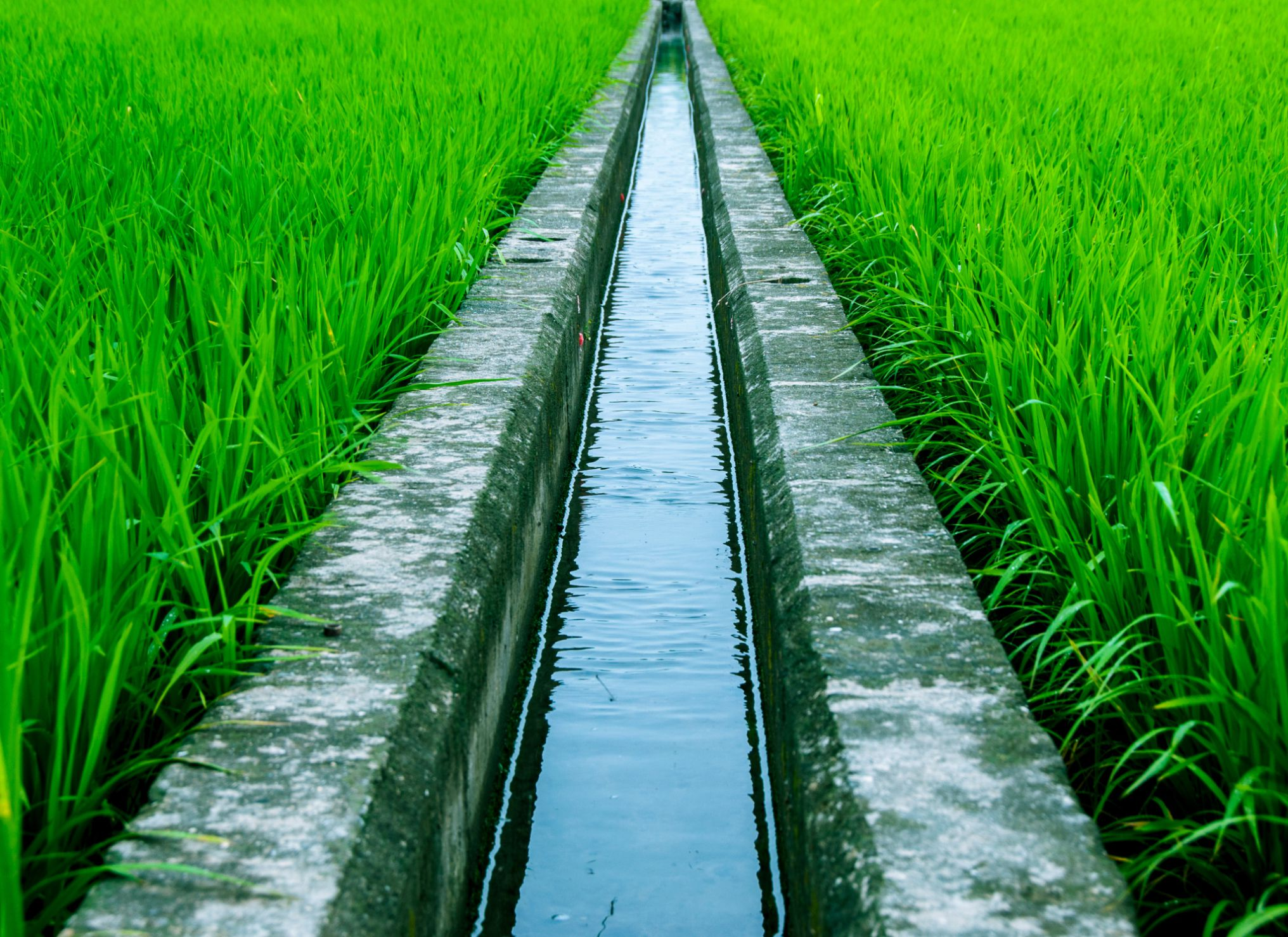Learn About Irrigation Systems Used In Organic Farming