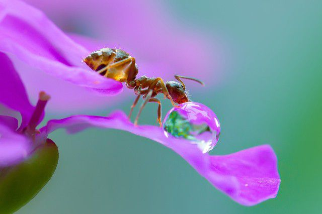 Ant on purple flower