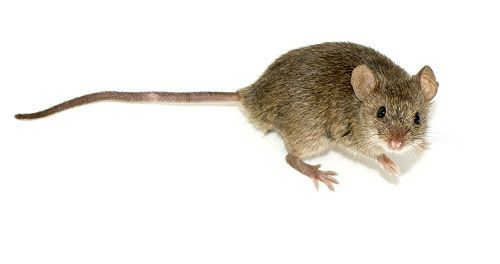 Get rid of ants mice flies and spiders get rid of mice ccuart Choice Image
