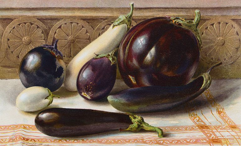 A Handful of Eggplant Varieties