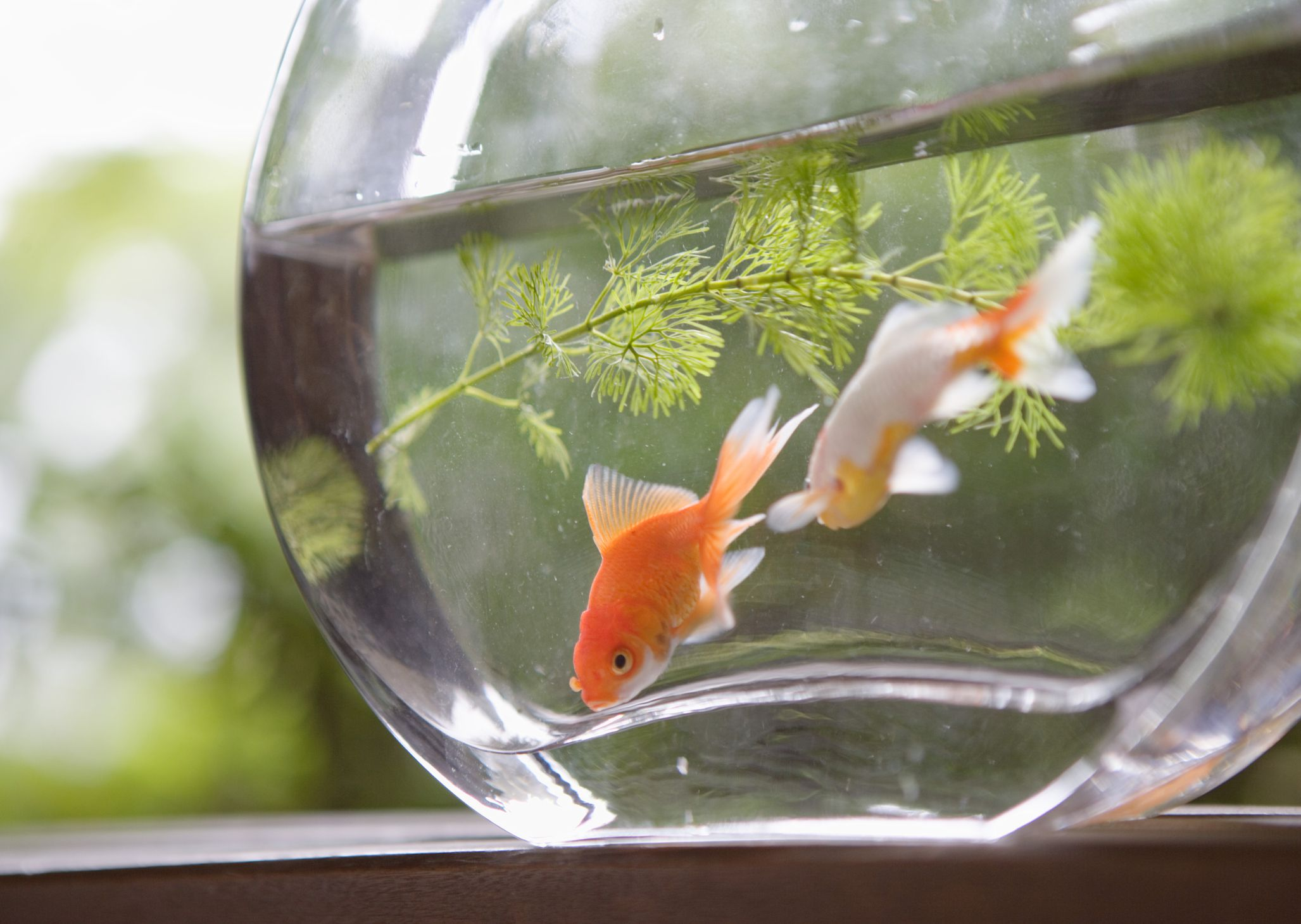 Starting a Fresh Water Aquarium? Avoid These Common Mistakes