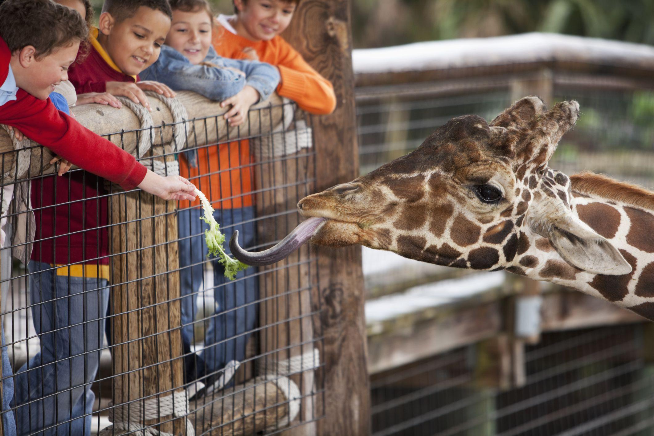 Plan Ahead When Taking Grandchildren To The Zoo