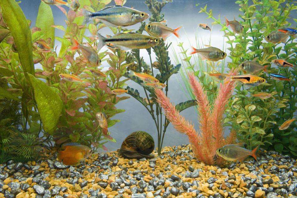 Aquarium full of colorful tropical fish
