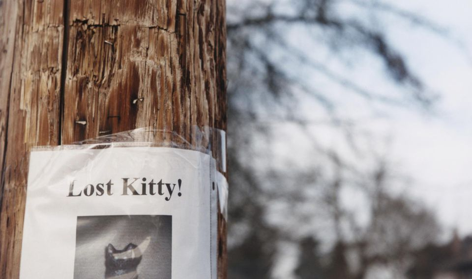Lost Kitty Poster