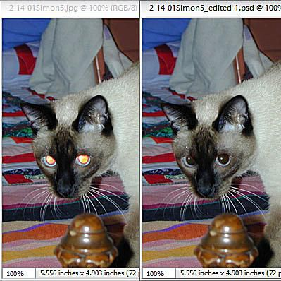 How to fix pet eye in your photos dealing with glint problems sciox Image collections