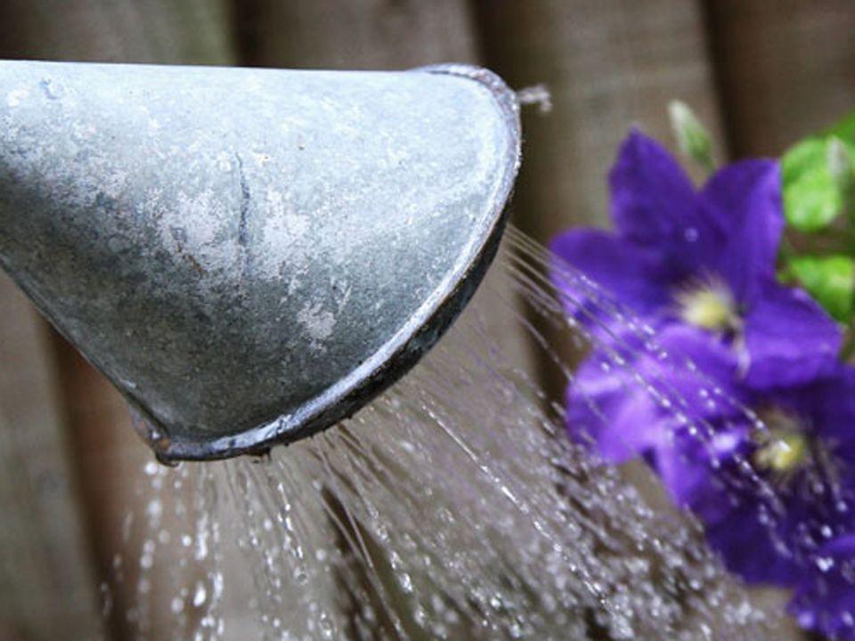 Wateringn Flowers