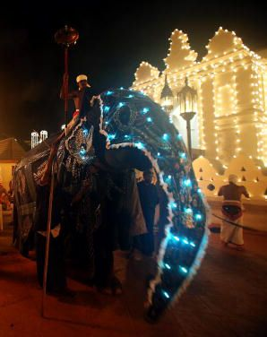 Elephant of the Tooth Festival
