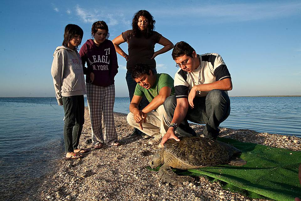 Working with sea turtles on a volunteer vacation