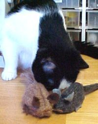 Cat Mouse Toy with Catnip