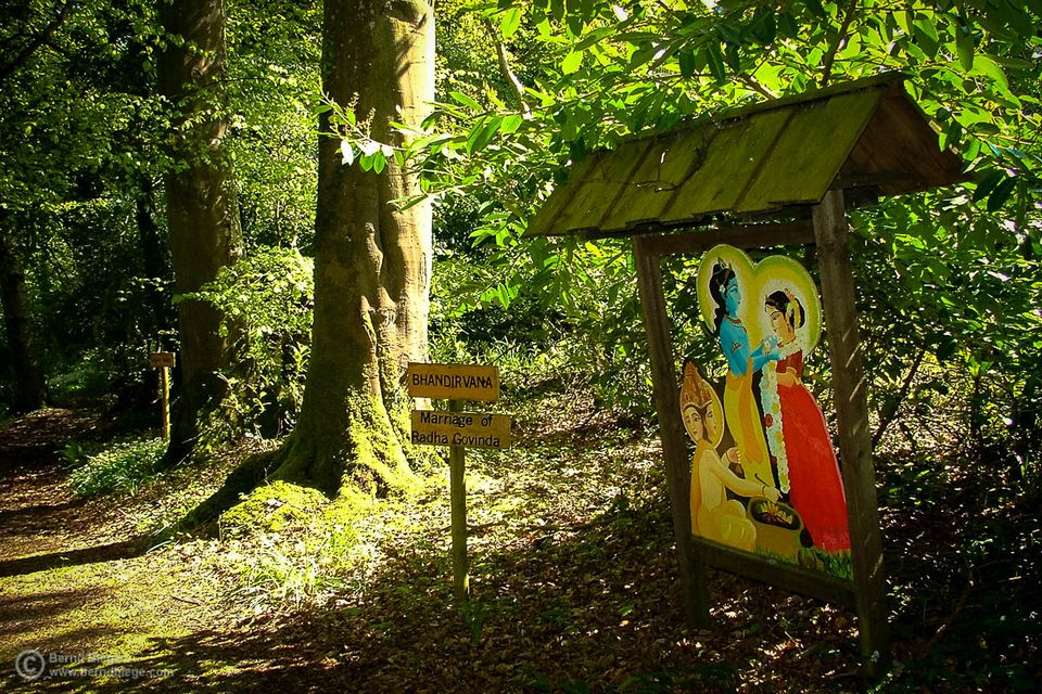 In the woods on Inis Rath ... the Krishna connection is often subtly brought to mind