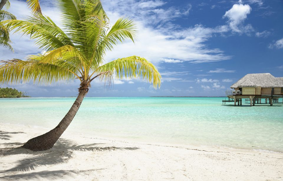 Types of palm trees cold hardy choices for the north image palm tree on tropical beach voltagebd