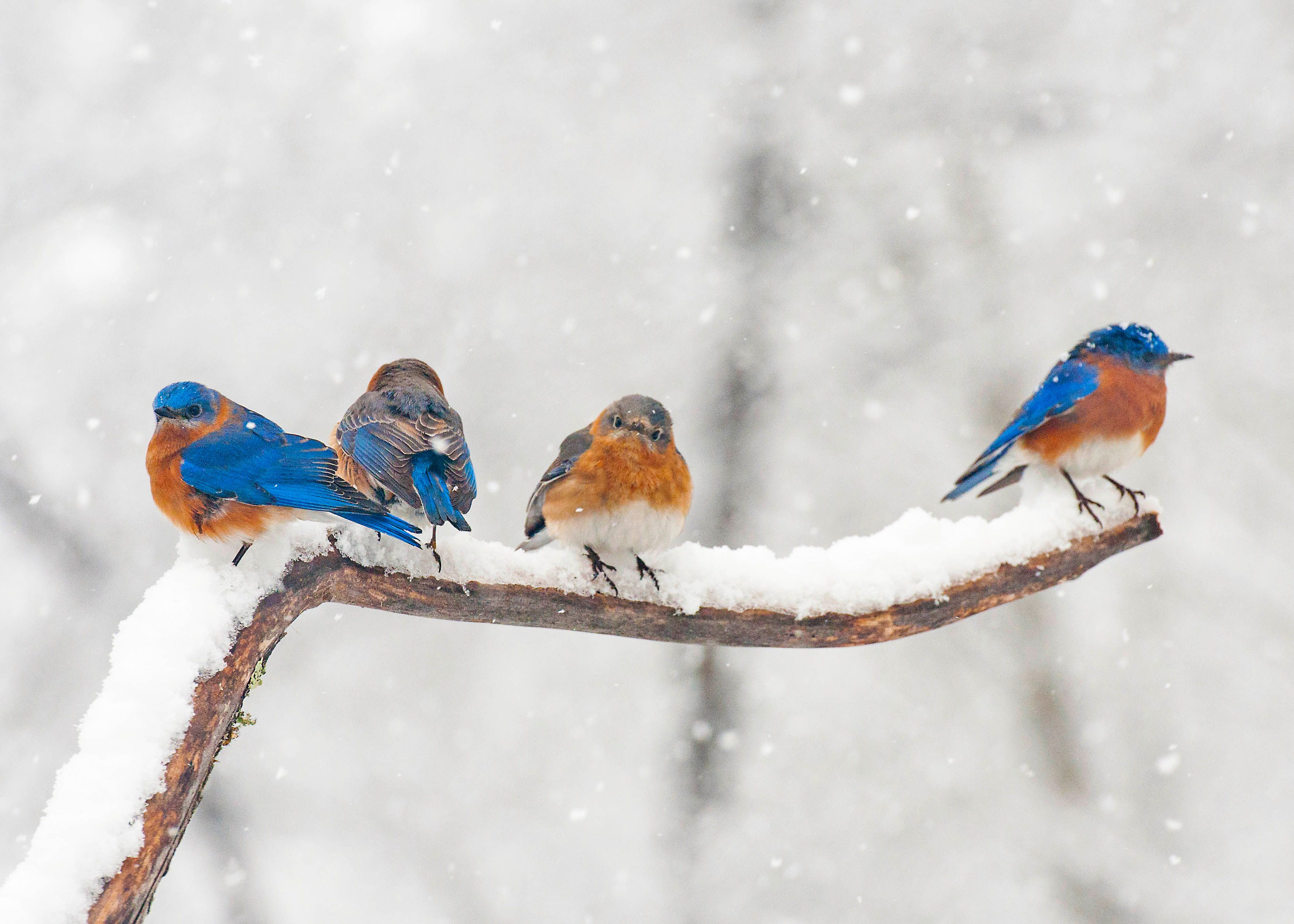 Decor Home Ideas Best Tips On How To Attract Birds In The Winter