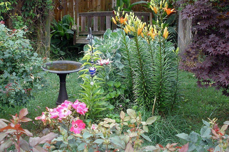 Birdscaped Yard With Bird Bath