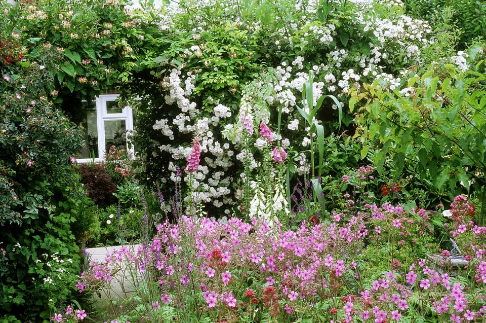 Flowers traditionally used cottage garden plants for Typical landscaping plants