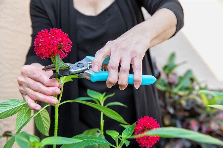 woman cutting flowers