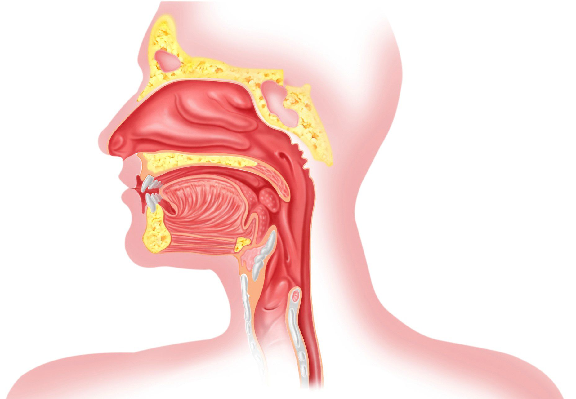 The Upper Esophageal Sphincter and Acid Reflux