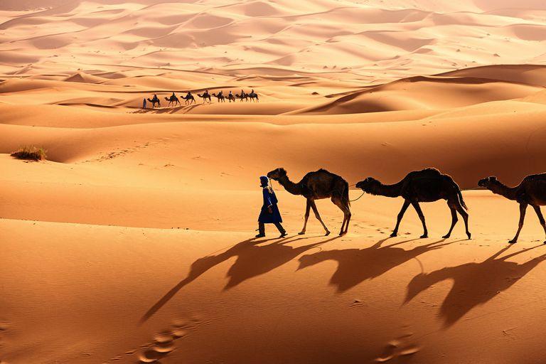 Learn About The Sahara Desert - Sahara desert location