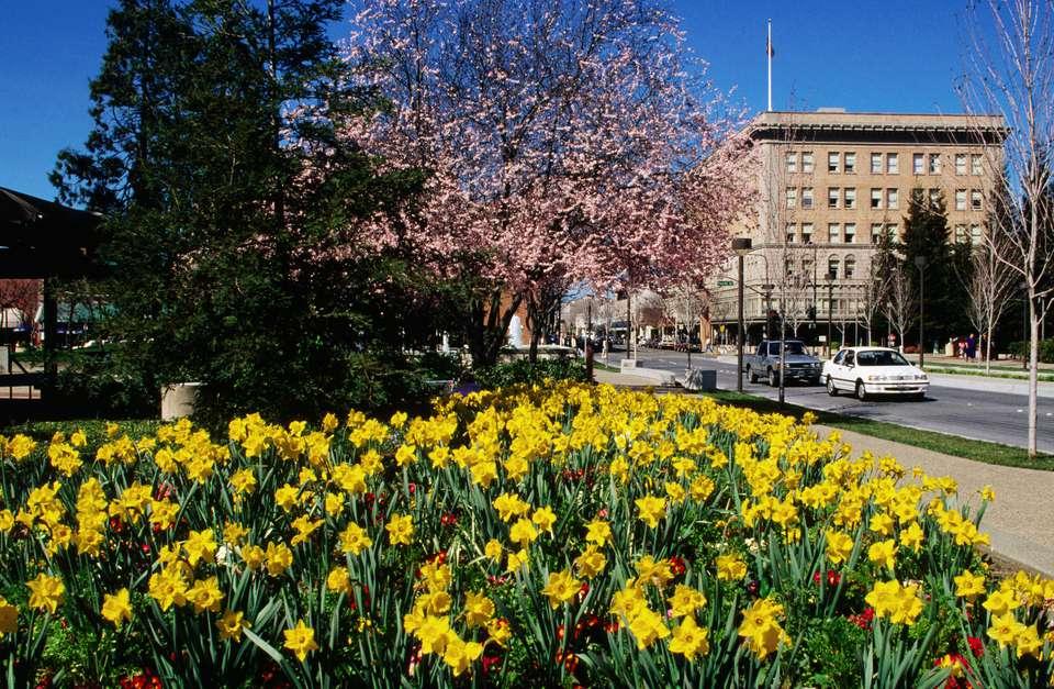 Daffodils in downtown.