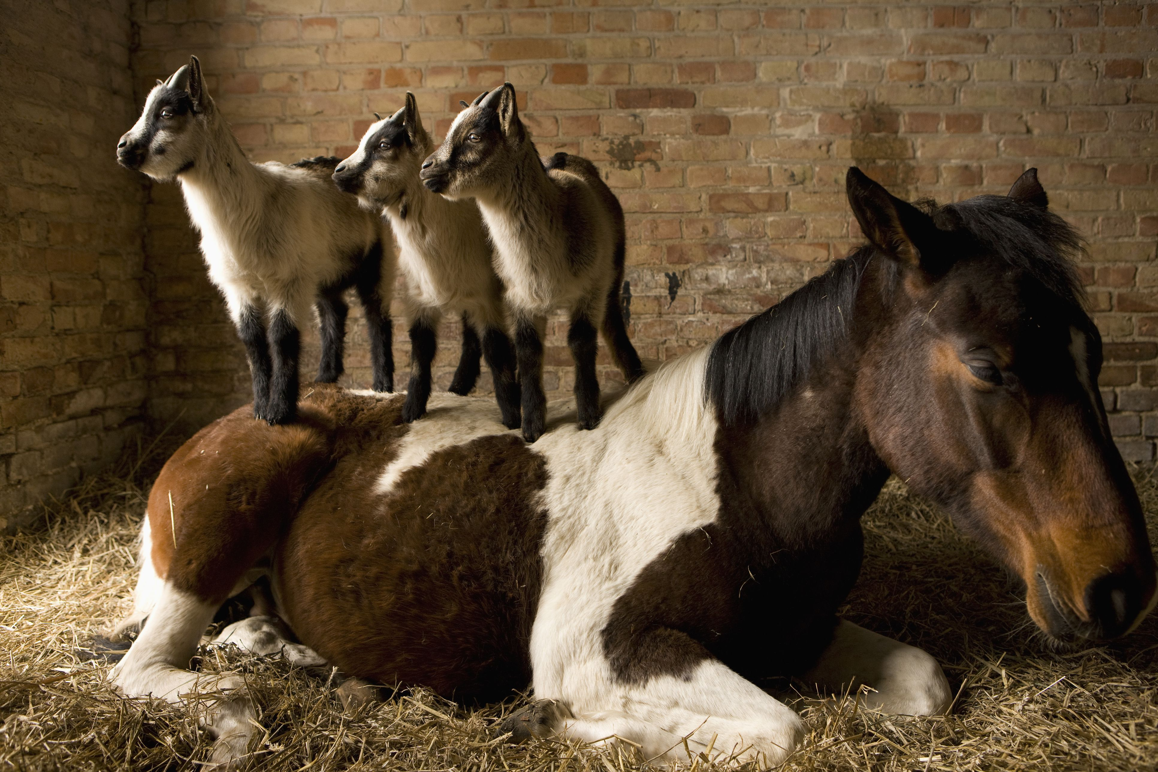 Does My Horse Need A Companion Companions For Horses