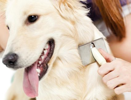 Natural Way To Treat Dog Ear Mites