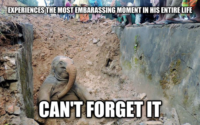Funny Animal Memes : The 20 funniest animal memes