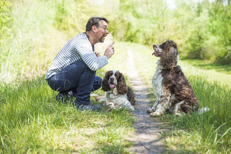 Hombre entrenando perros