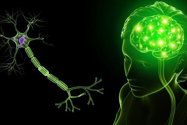 Repairing Myelin in Multiple Sclerosis