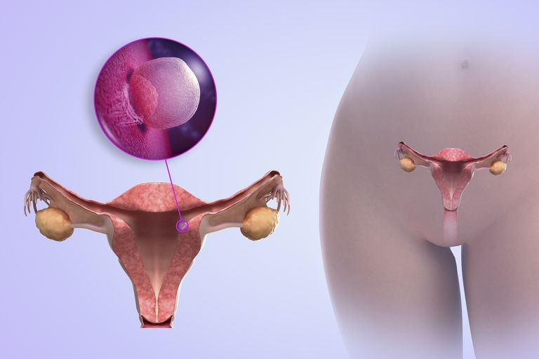Implantation of embryo in pregnancy