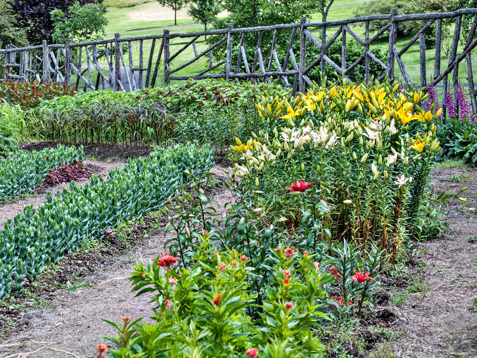 How to plan and grow a cutting garden for Landscaping your own garden
