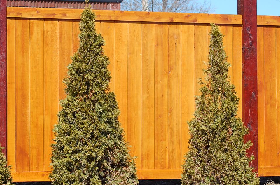 Fence with shrub planting in front.