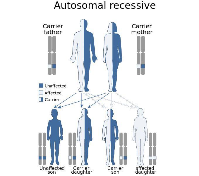 autosomal recessive diagram