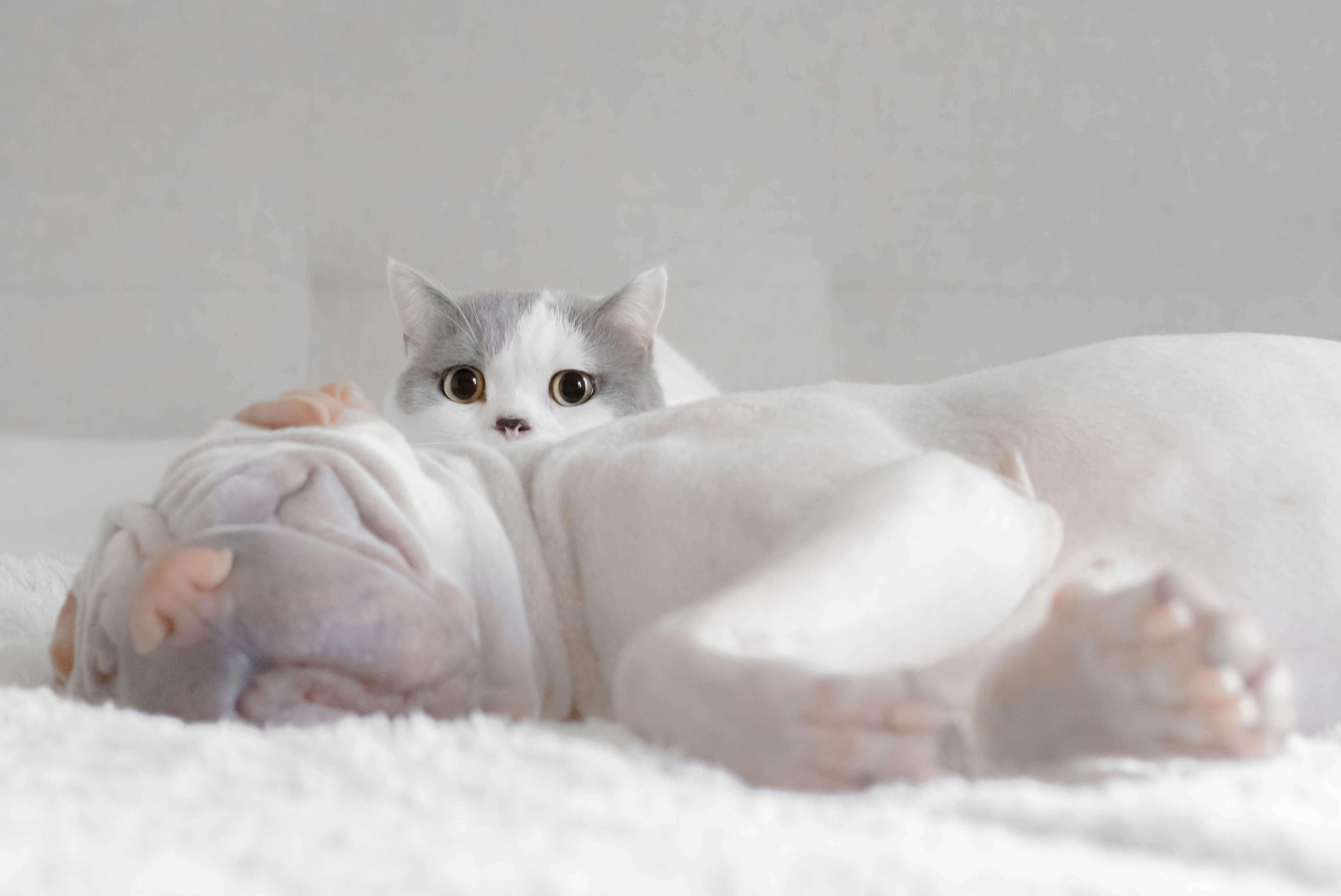 Enalapril Side Effects In Cats