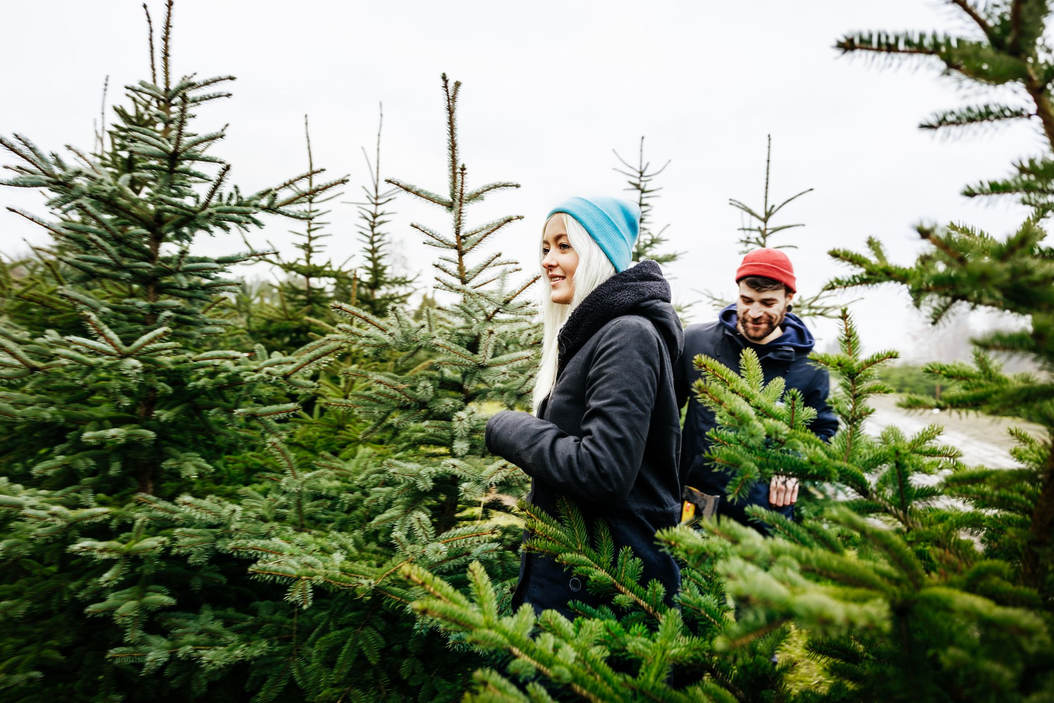 The Most Popular Types of Christmas Trees