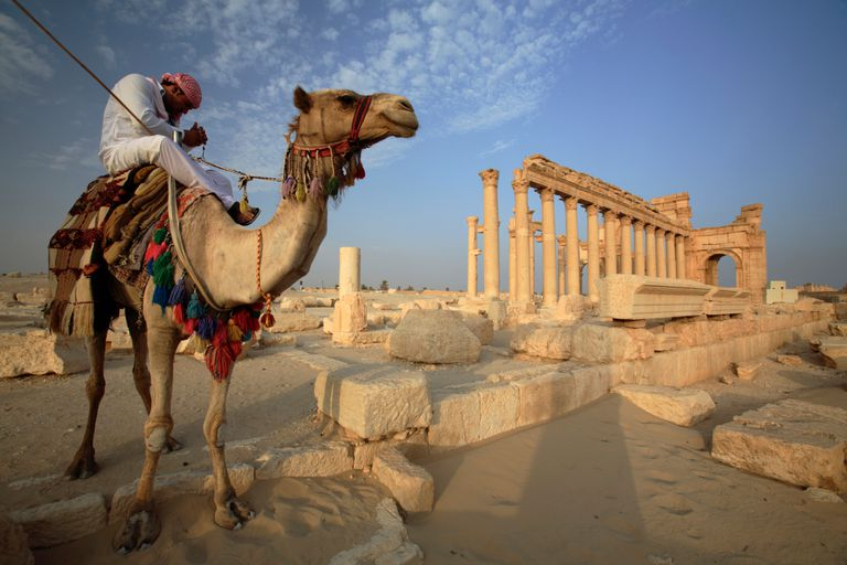 Camel at the Archaeological Site of Palmyra