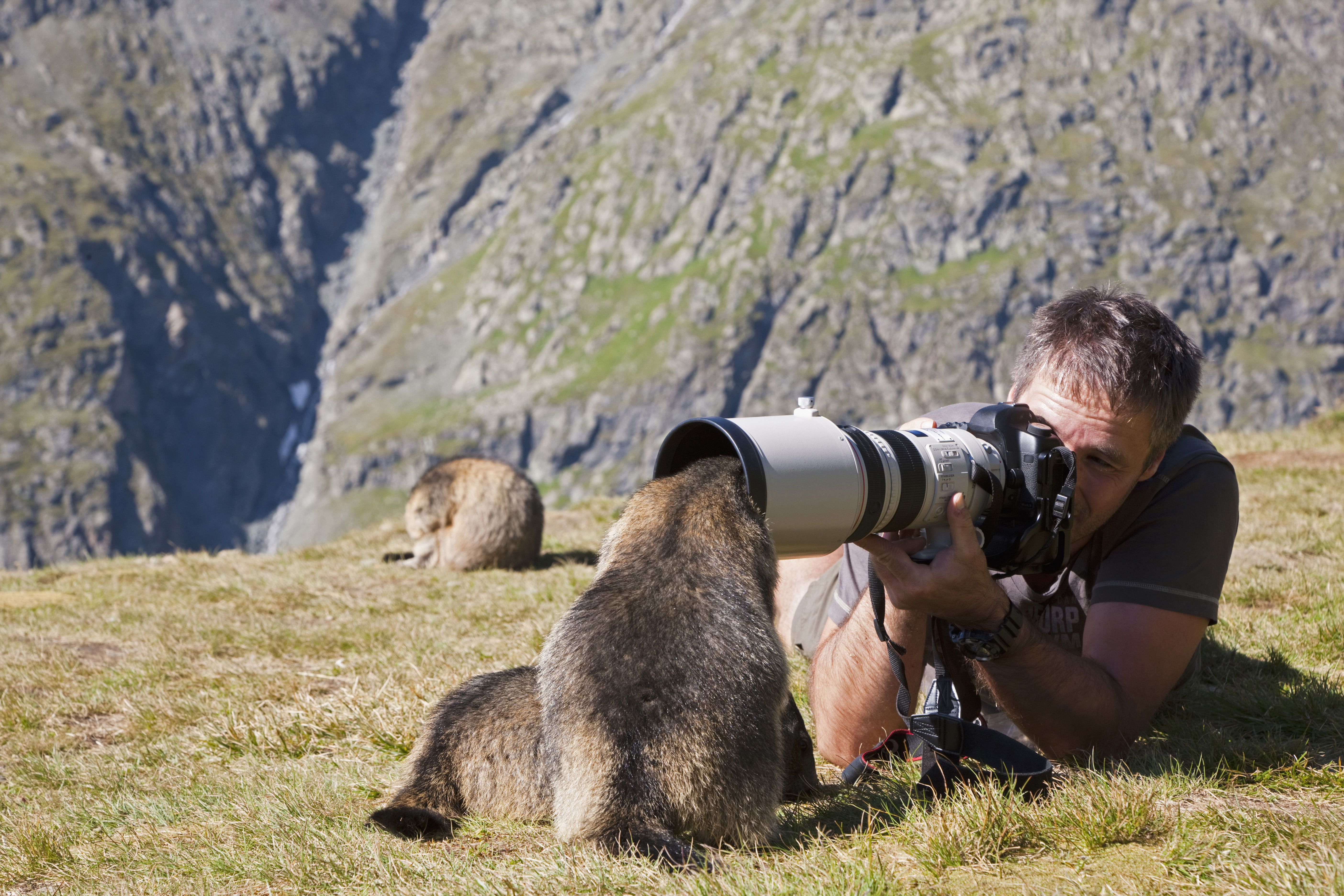 animal photographer career profile - Wildlife Biologist Job Description