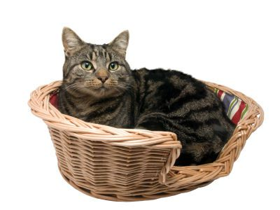 A small basket or even a box lined with blankets or towels makes a good bed
