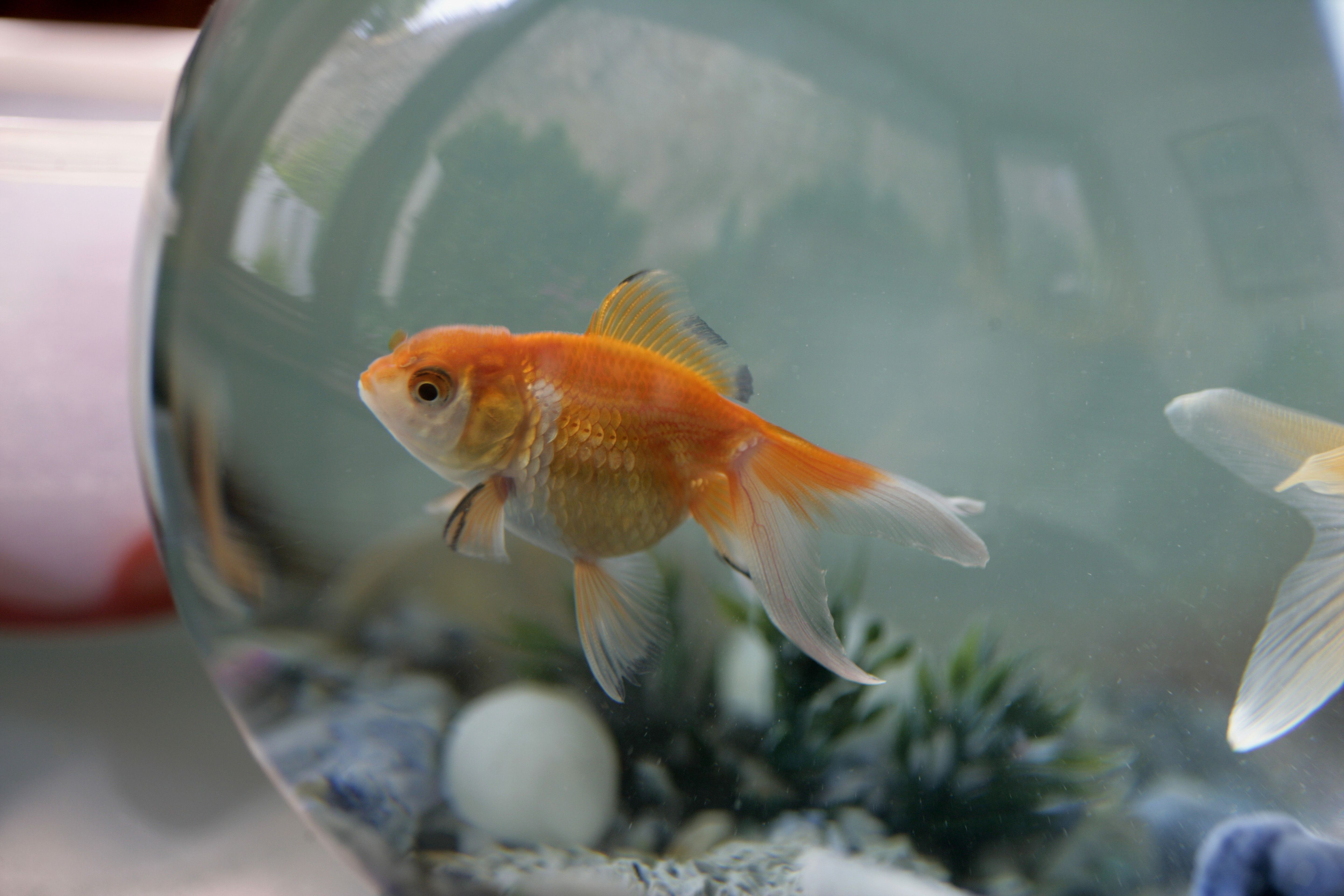 Names You Can Give Your Pet Fish
