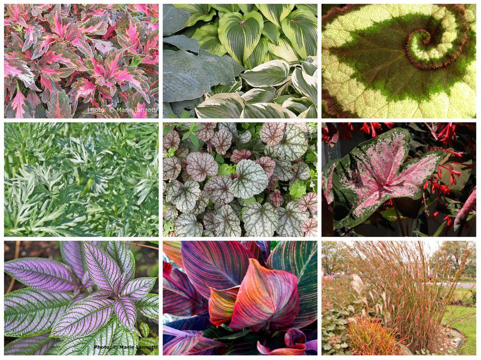 Best Foliage Plants