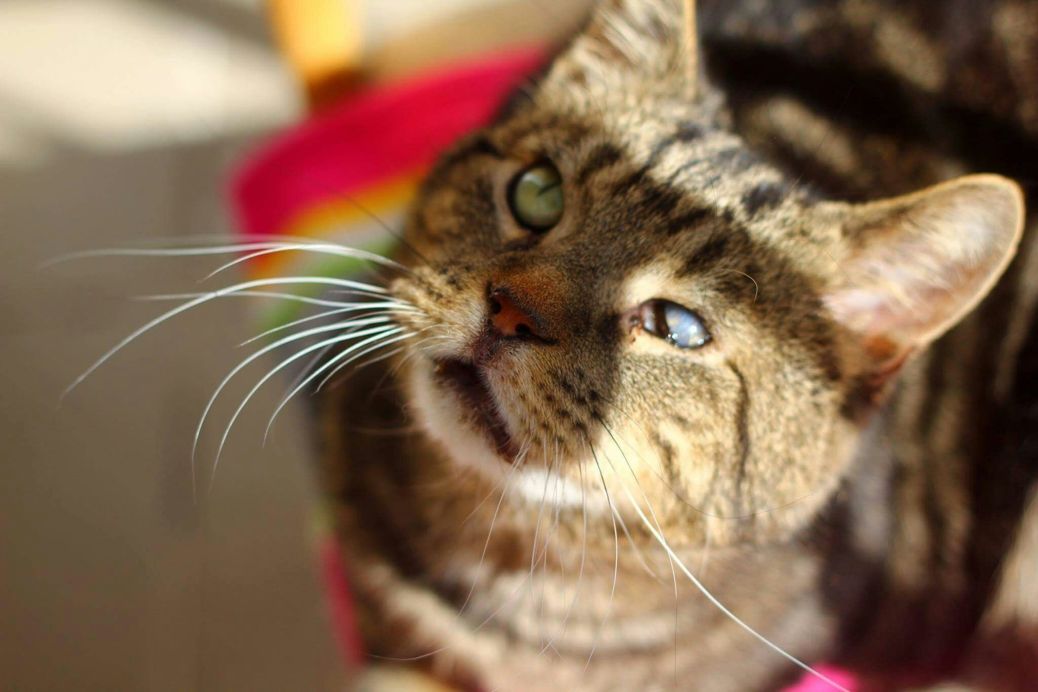Eight Ways To Help A Blind Cat